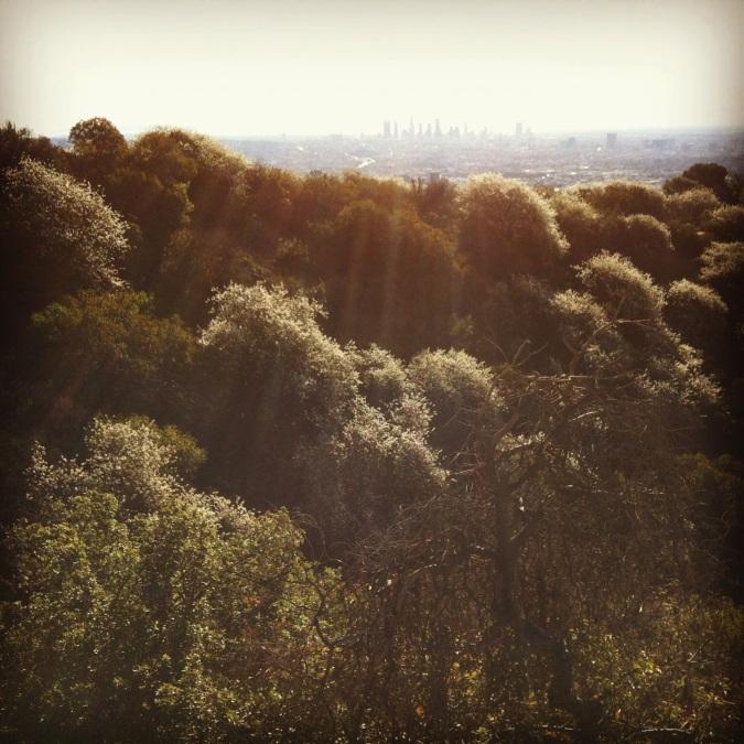 LA and bushes